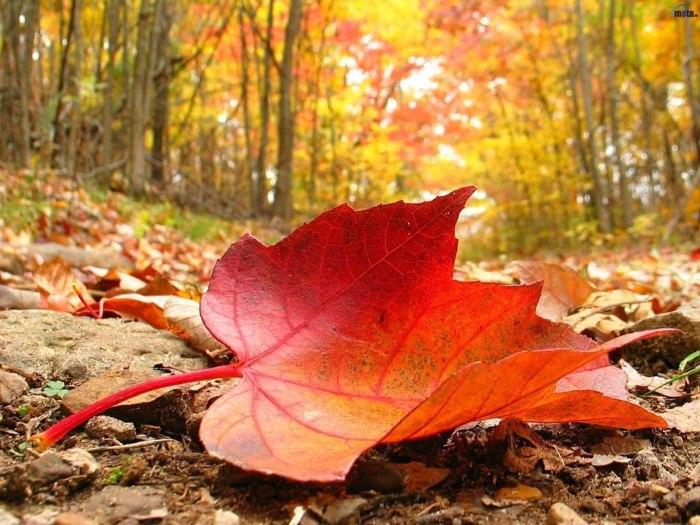 Cuidado del toldo en otoño